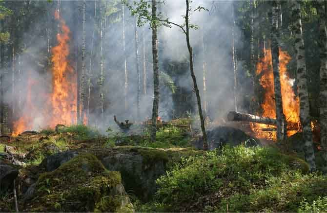 burning australian forest, consequences of climate change